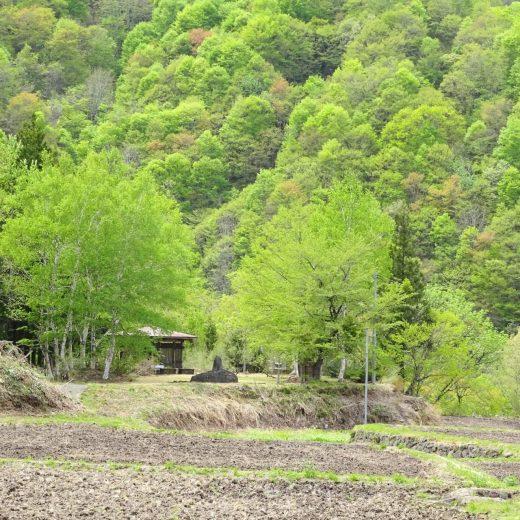 新緑の秋山郷